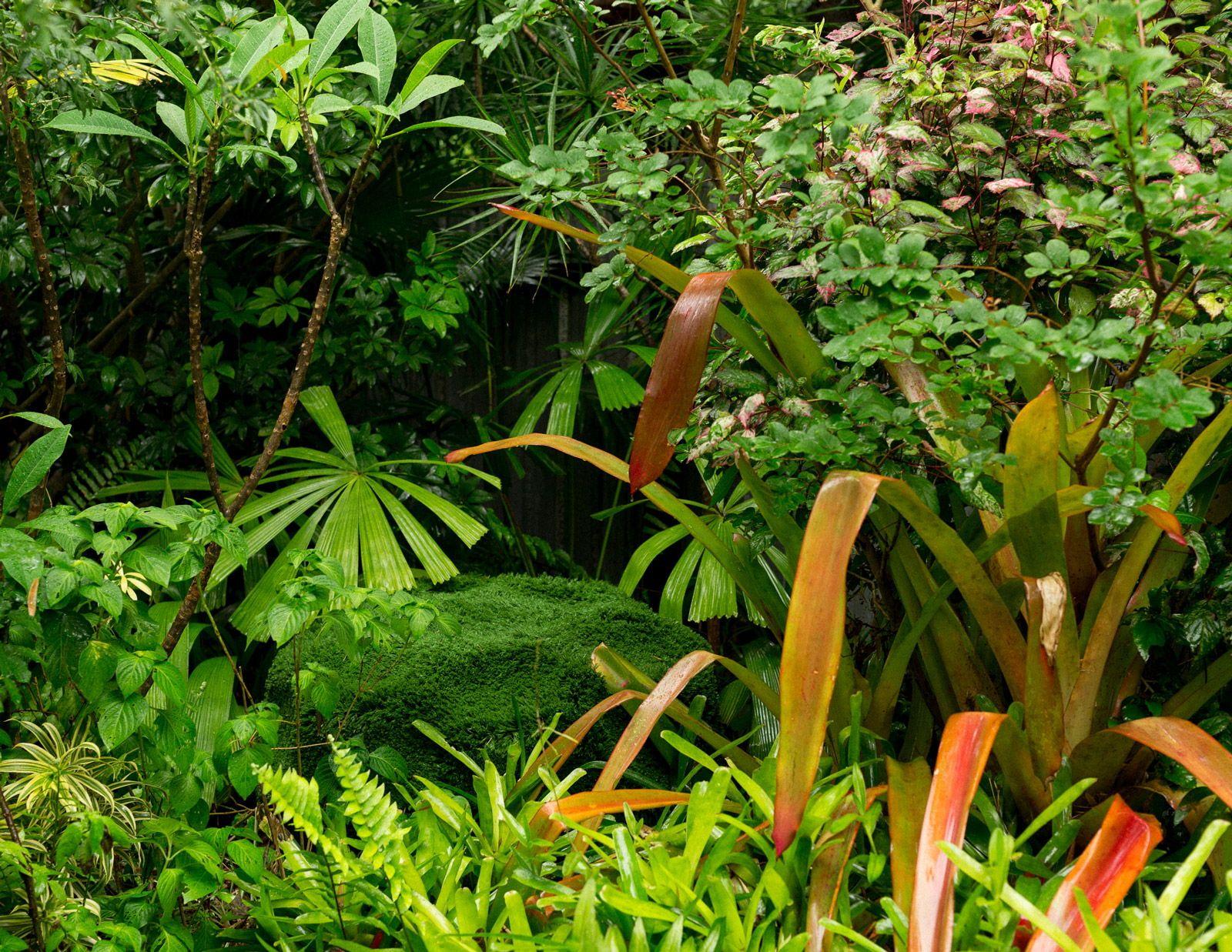 A Tropical Brisbane Garden Wonderland | Garden, Tropical ...