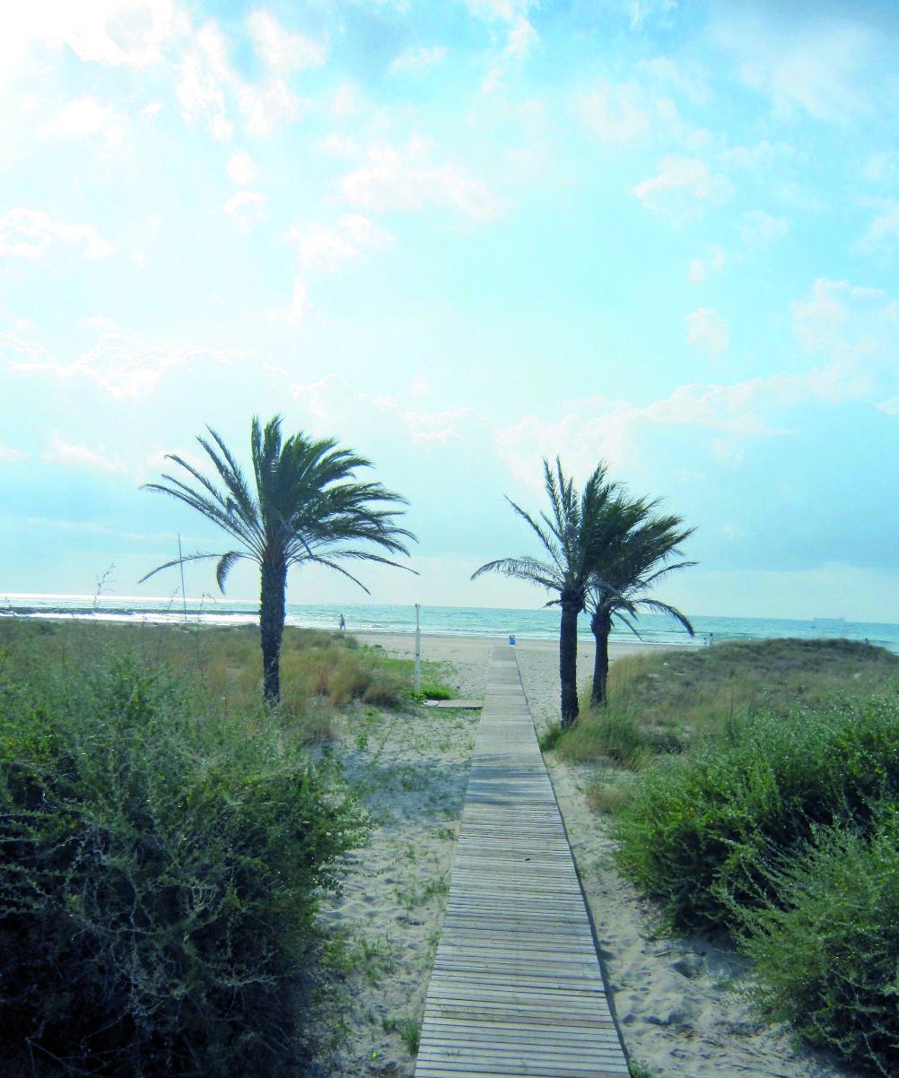 Playa Serradal Caminos Naturales Entre Dunas Y Plantas Playas Castellon Playa Valencia España
