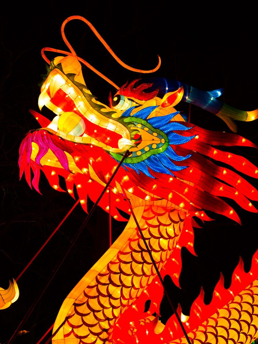Website Unavailable Chinese new year dragon, Chinese new