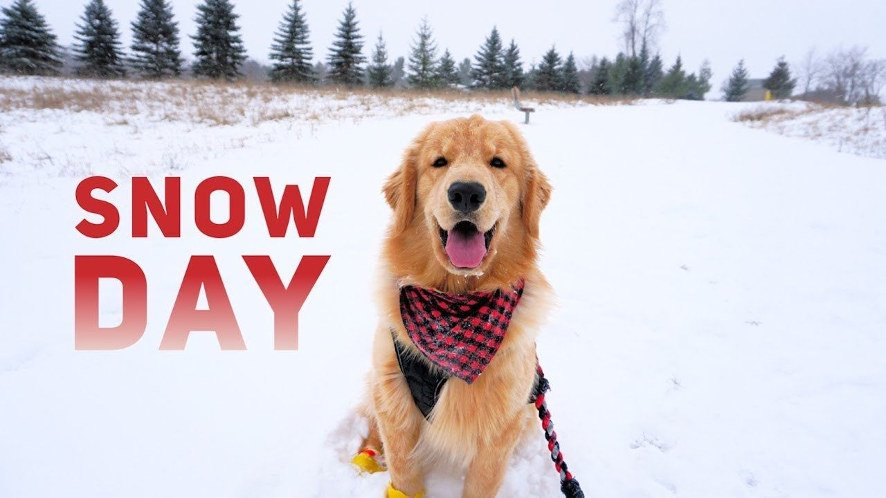 Tucker Has A Snow Day Vlog Youtube Funny Animal Videos Cute