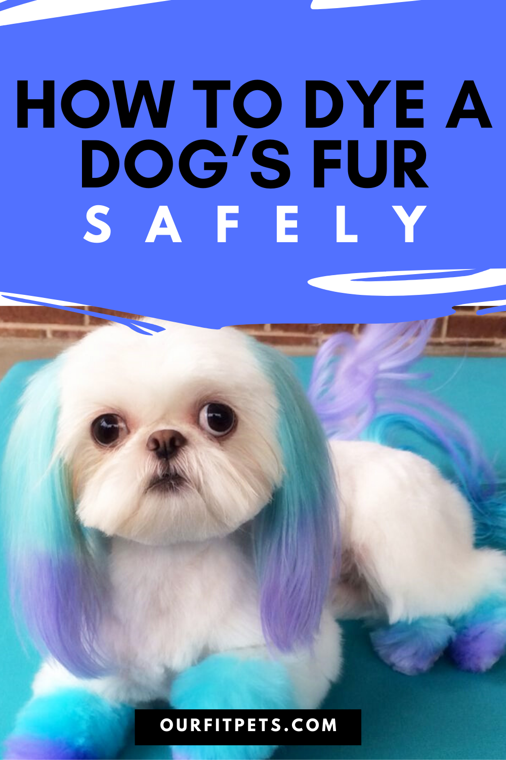 Dog Friendly Halloween Events 2020 How to Dye a Dog's Fur Safely | Our Fit Pets in 2020 | Dogs, Dog
