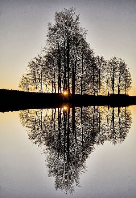Tree Reflections Nature Photography Reflection Pictures Scenery