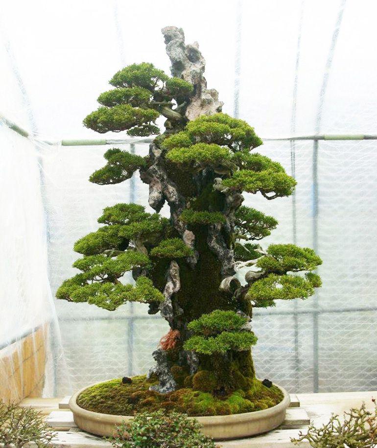 Bonsai Bark Promoting And Expanding The Bonsai Universe Bonsai Tree Bonsai Art Bonsai