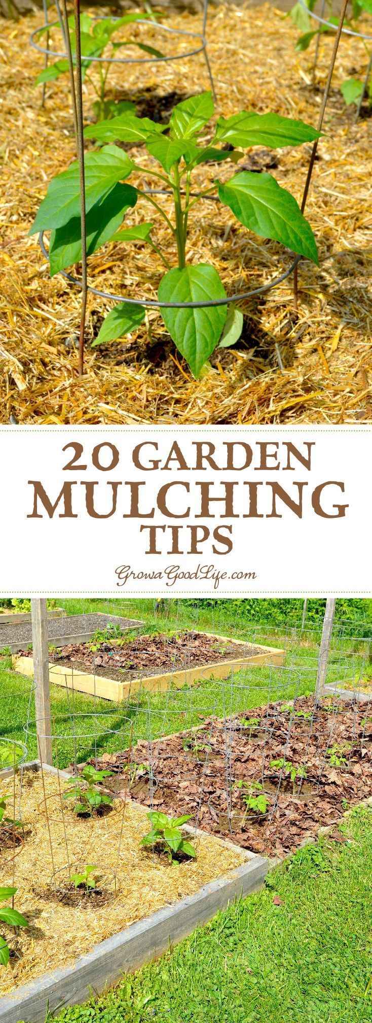 20 Garden Mulching Tips from Seasoned Growers | Layering, Gardens ...