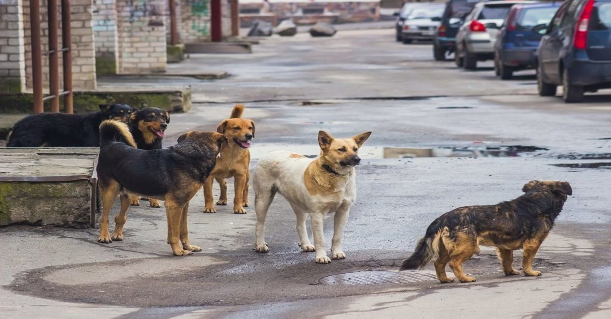 Egypt Will Export 4500 Stray Dogs And Cats To Meat Eating Countries Street Dogs Dogs Dog Cat