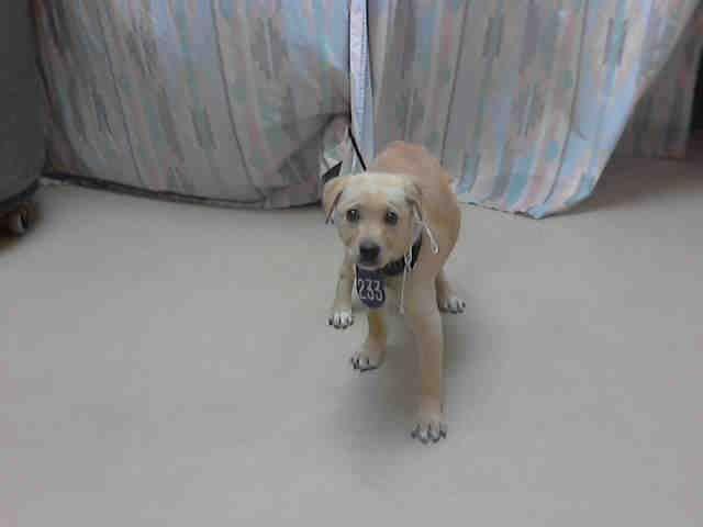 Sierra Houston Texas Petharbor Com Animal Shelter Adopt A
