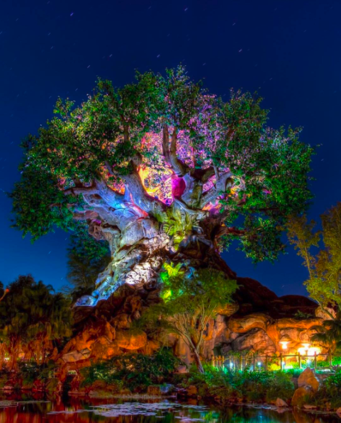 Disney's Animal Kingdom's magical Tree of Life is a sight to behold. It's 50 feet wide, 145 feet tall, and only a 30 minute drive from Kissimmee in Florida. Experience Kissimmee makes magical Florida Vacations. 📸  via @falandodedisney