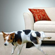 How To Stop Dog From Peeing In The House Pets Dogs Pet Urine