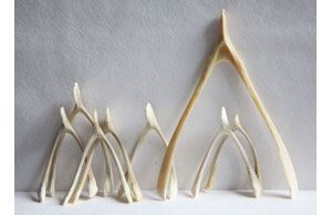 The Wishbone Project S First Crowdsourced Wishbones