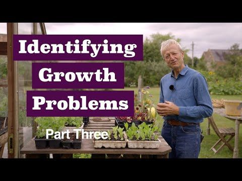 Identify problems 3 includes squash, bolting, large roots, compost - YouTube