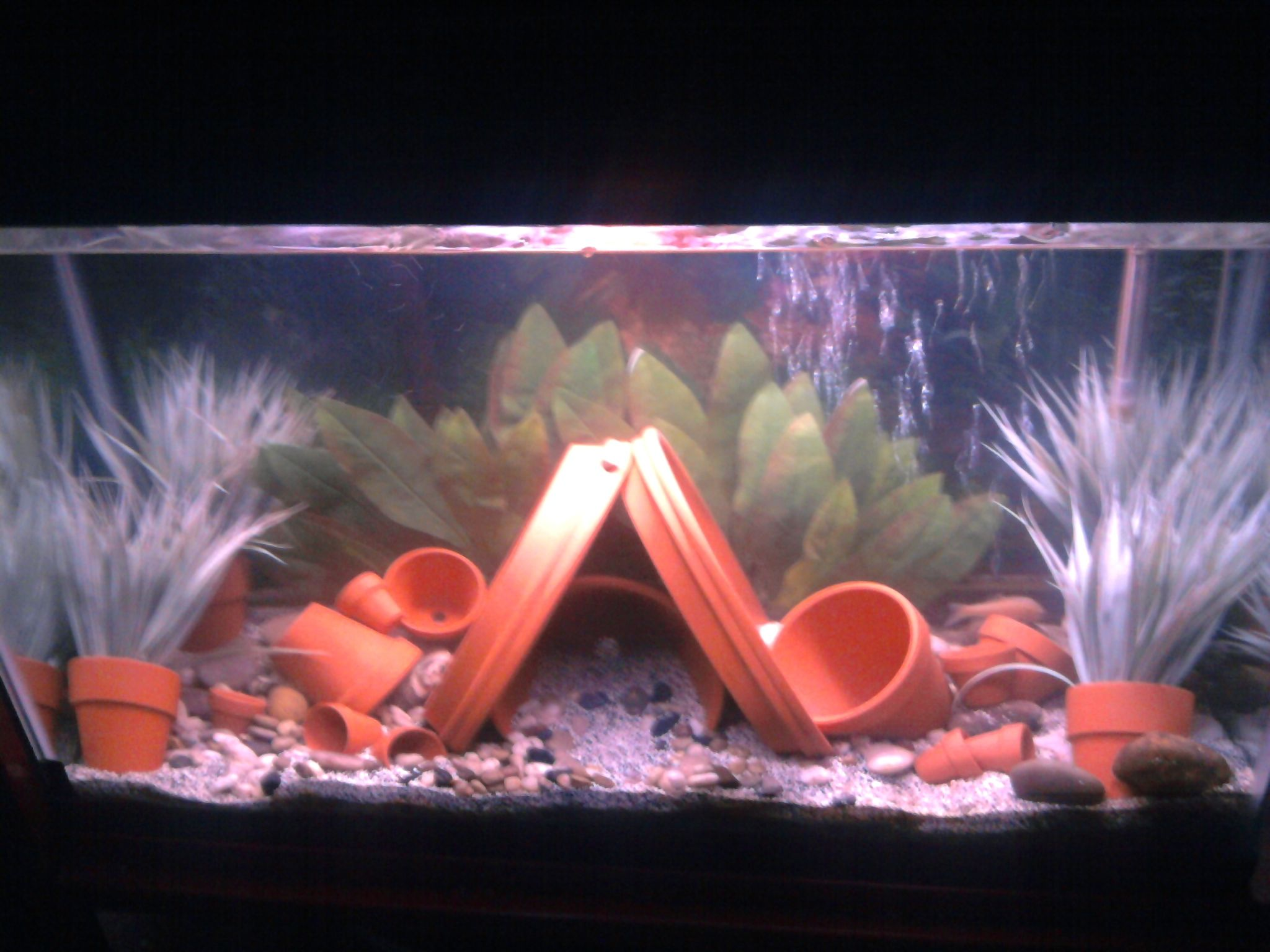 Fish tank electricity cost - My Attempt To Use Clay Pots In Aquarium And Not Look Boring Total