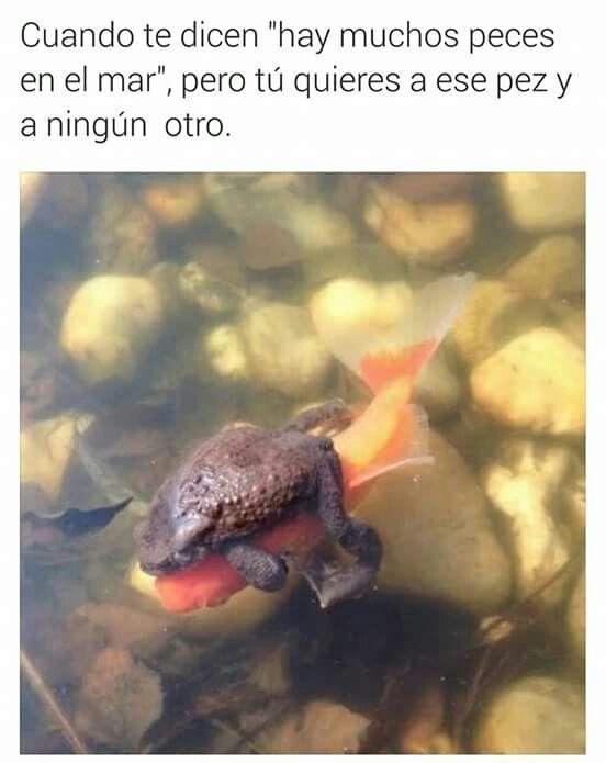 Hay muchos peces en el agua :(
