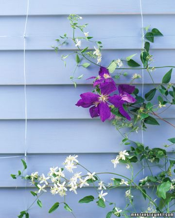 Invisible Trellis Vines Appear To Defy Gravity Let Your