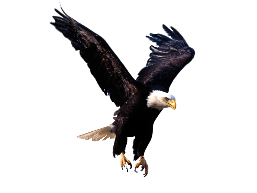 Eagle PNG image free picture download Graphic Design