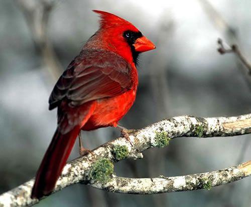 Epingle Par Laurence Laroche Joubert Sur Aves Birds Animaux Et Oiseaux Oiseaux Beaux Oiseaux