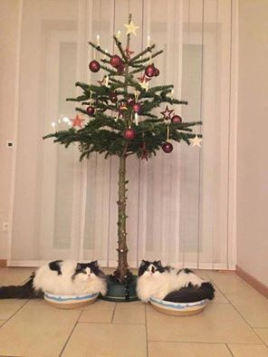 Cat-proofed the Christmas tree. 🎄😆 | Felinity | Pinterest | Cats ...