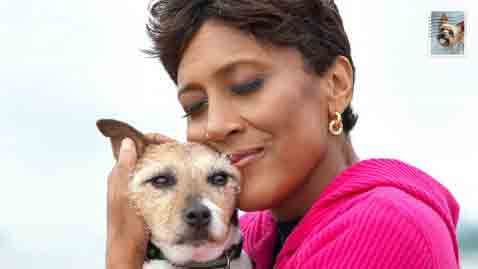 "Good Morning America's Robin Roberts with her Jack Russell Terrier.    ""A book by photographer Robin Layton will showcase dozens of dog owners' heartfelt letters to their pets along with photographs. Celebrities such as Kristin Chenoweth and Kathy Najimy are featured in ""A Letter to My Dog,"" as are ABC News' own ""Good Morning America"" co-anchor Robin Roberts and ""Nightline"" co-anchor Cynthia McFadden. The book will be published this fall by Chronicle Books."""