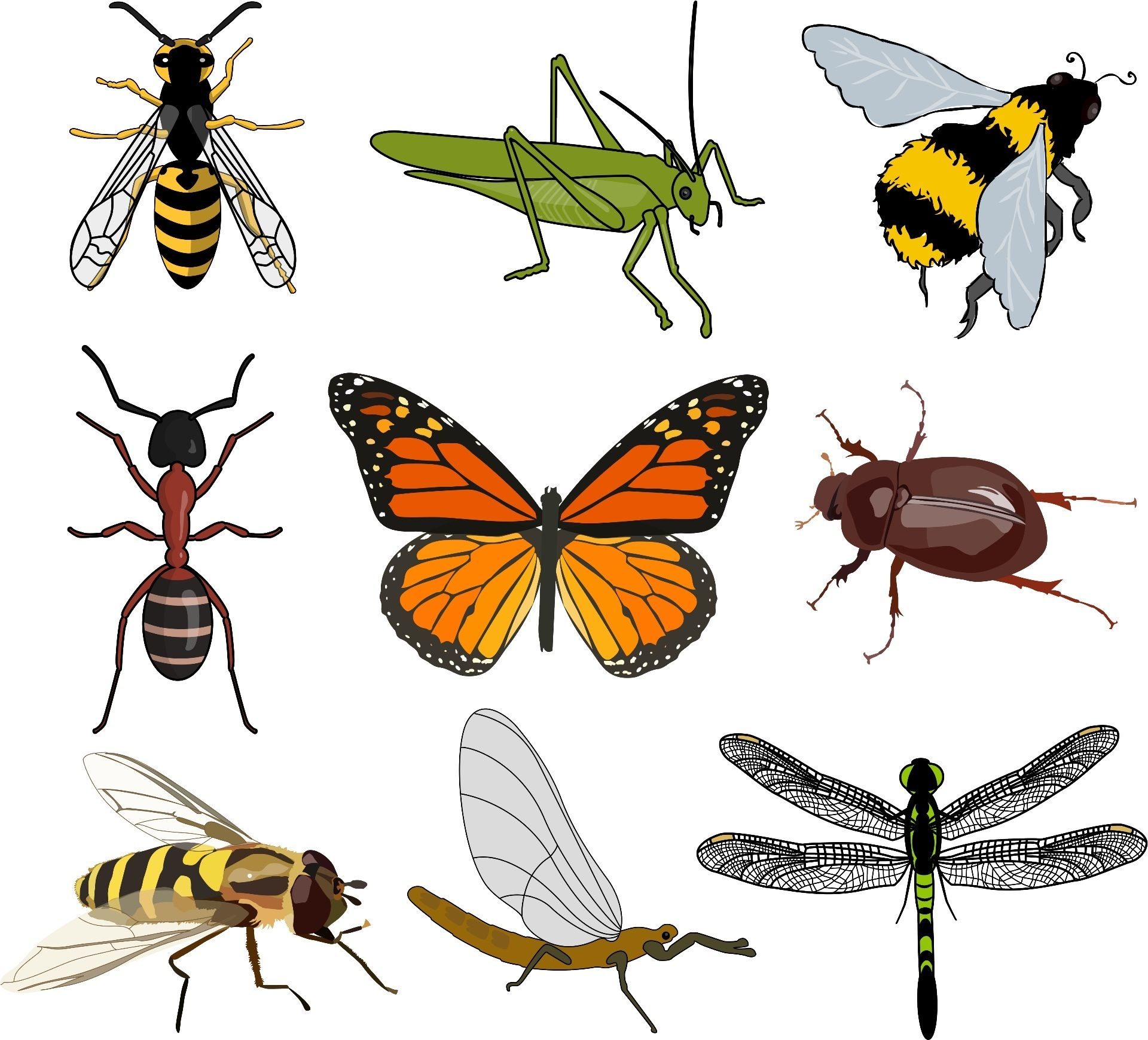 Images Of Invertebrates To Use For Display