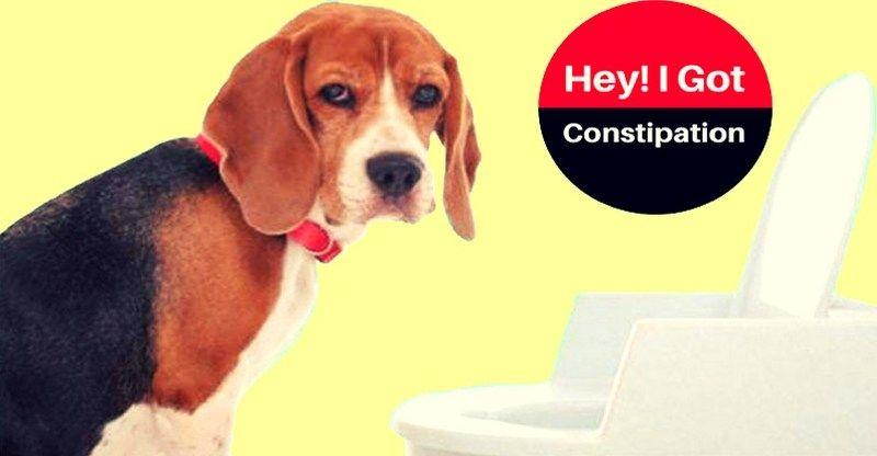 7 Remarkable Dog Constipation Symptoms & Remedies ...