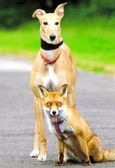 Dog life Hacks A major study of dingo DNA has revealed
