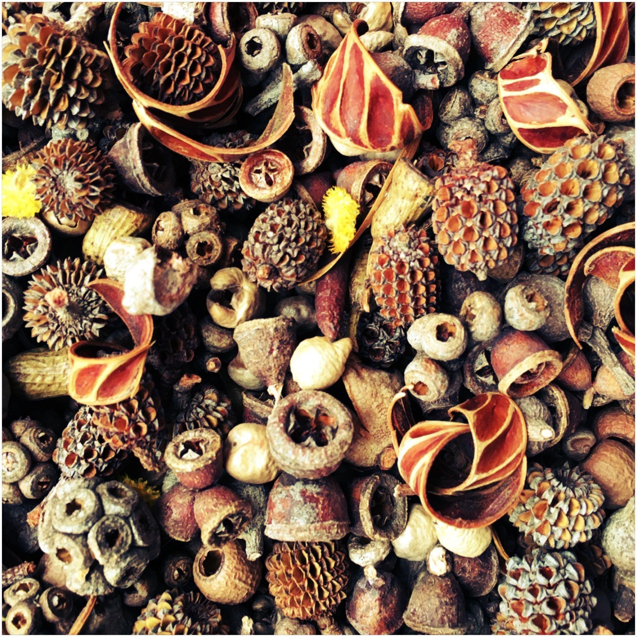 Native Australian Seed Pod Mix SMALL AU12.00 A beautiful