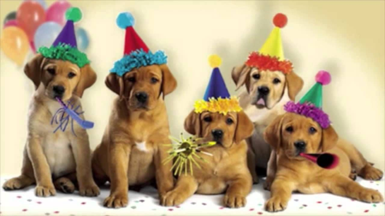 Image Result For Happy Birthday Dog With Images Happy Birthday