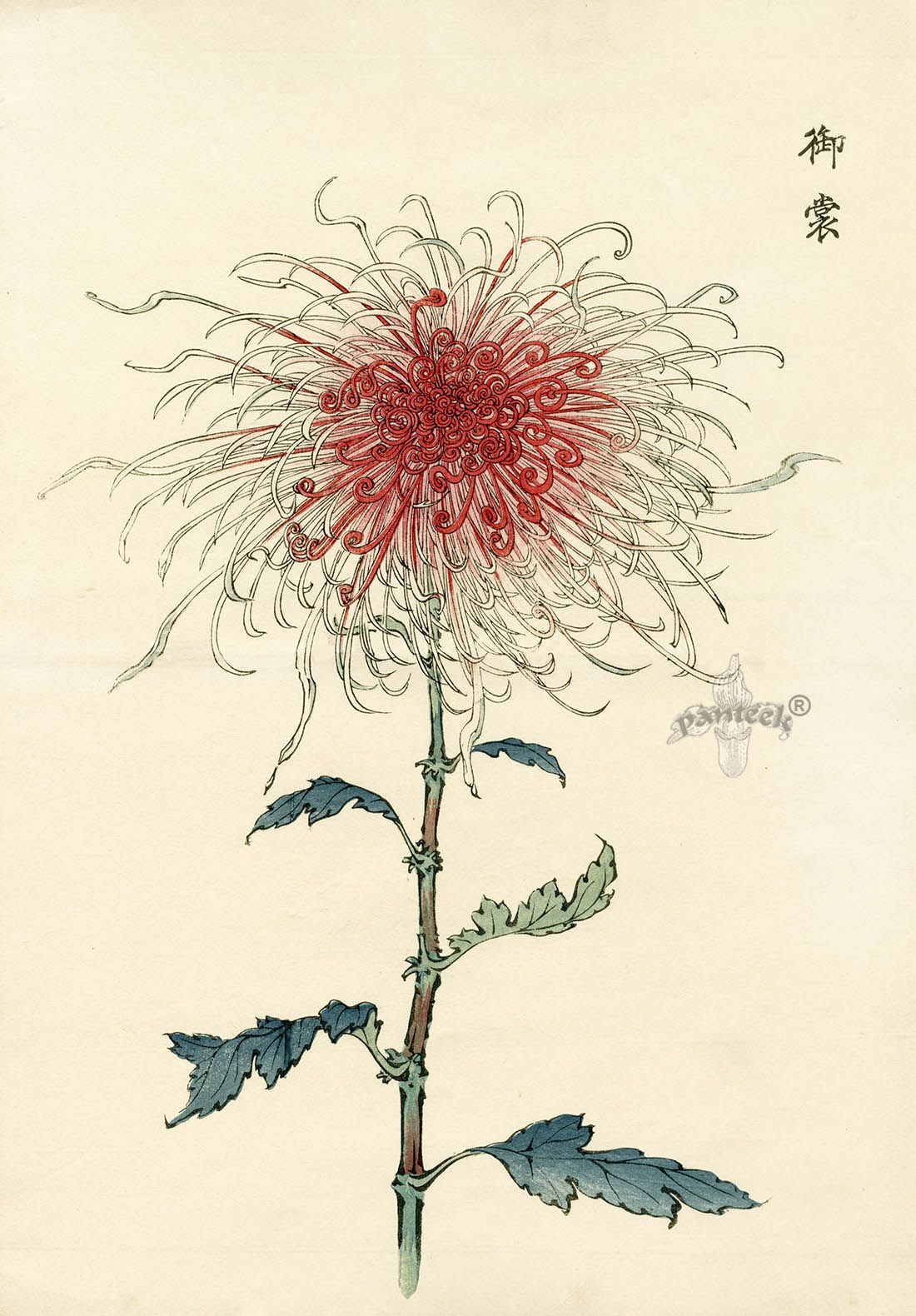 Keika Hasegawa Chrysanthemum Wood Block Prints 1st Edition 1893 Arte Japones Pintura Japonesa Dibujos