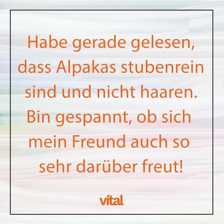 Witziger Spruch Alpaka Alpaka Spruch Witziger Witzige