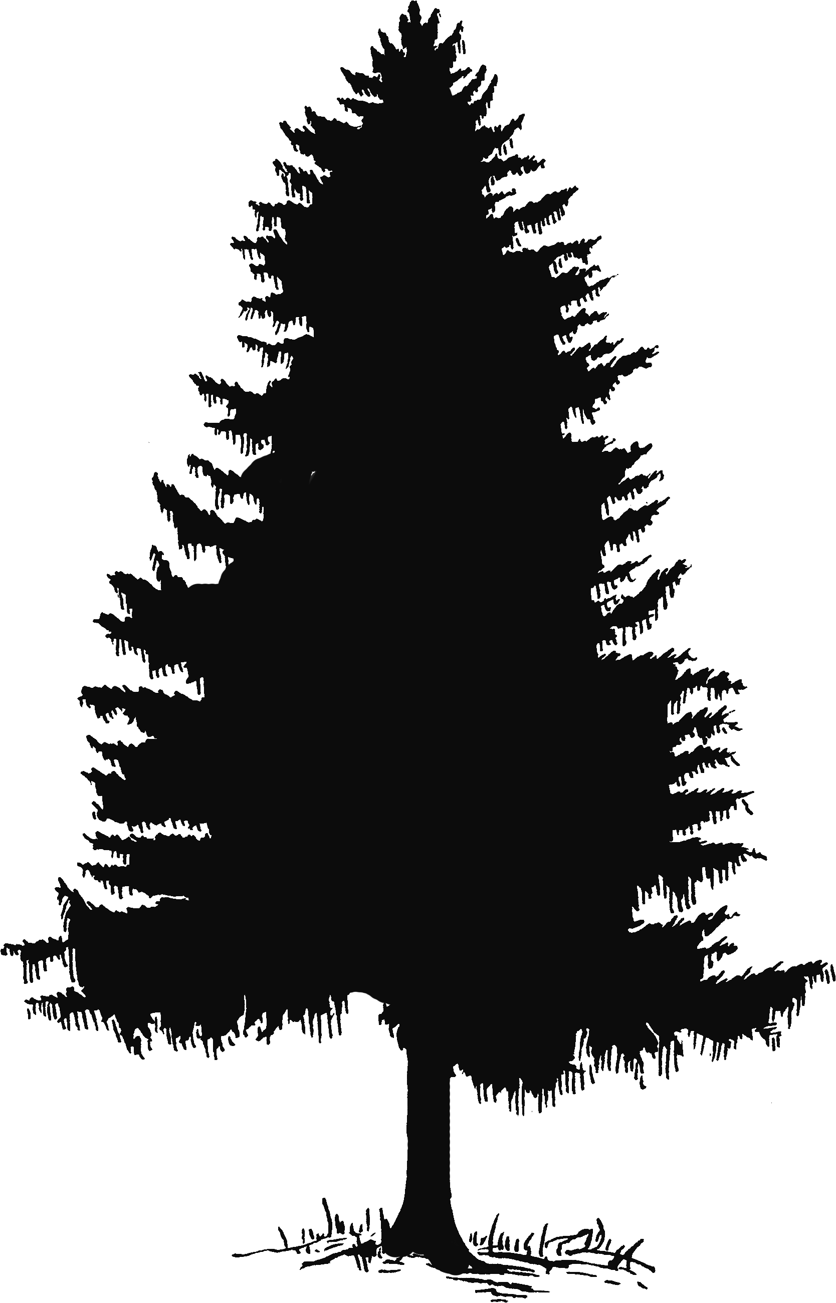 Pine tree tree silhouette and clip art on 2 Silhouette