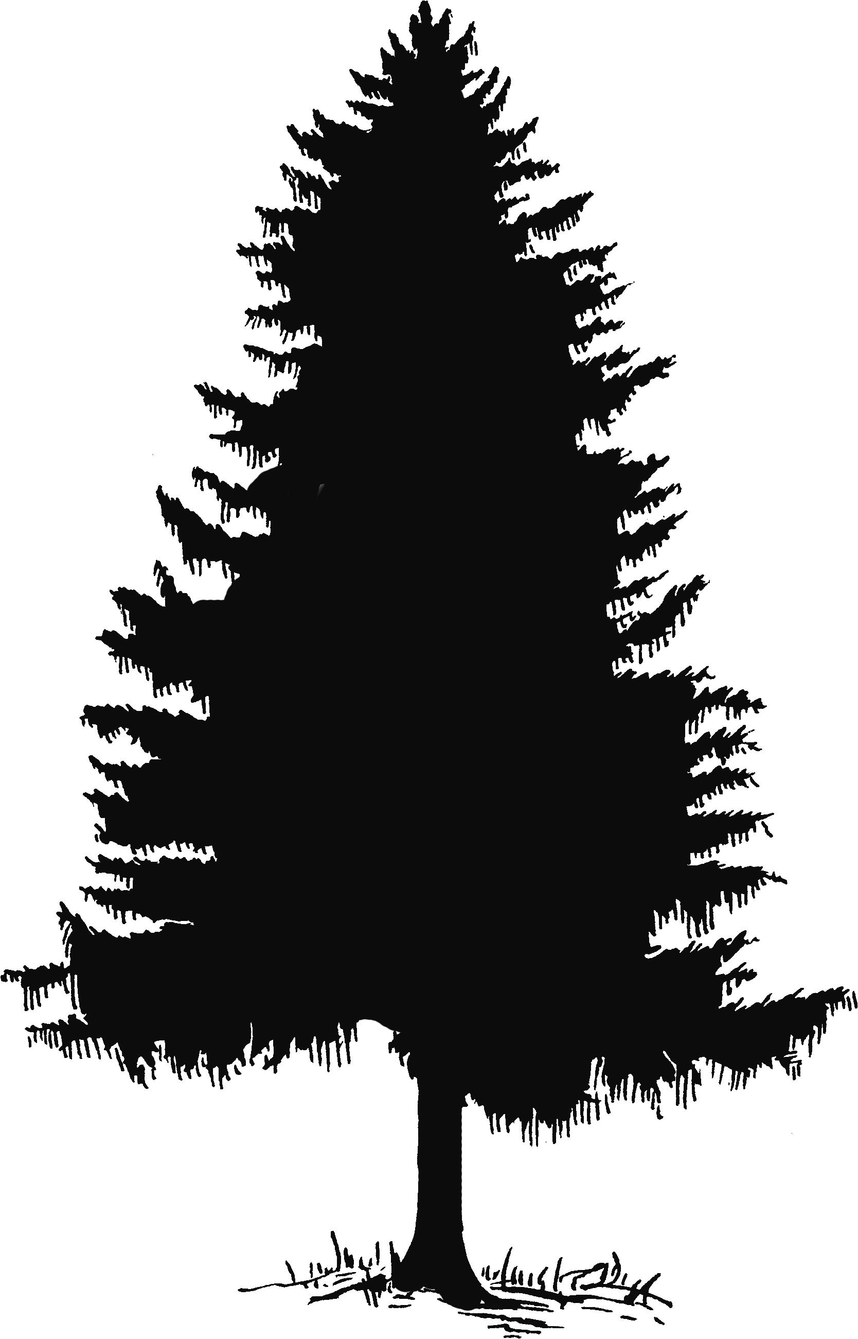 Cedar Tree Silhouette Clip Art Cedar tree drawing