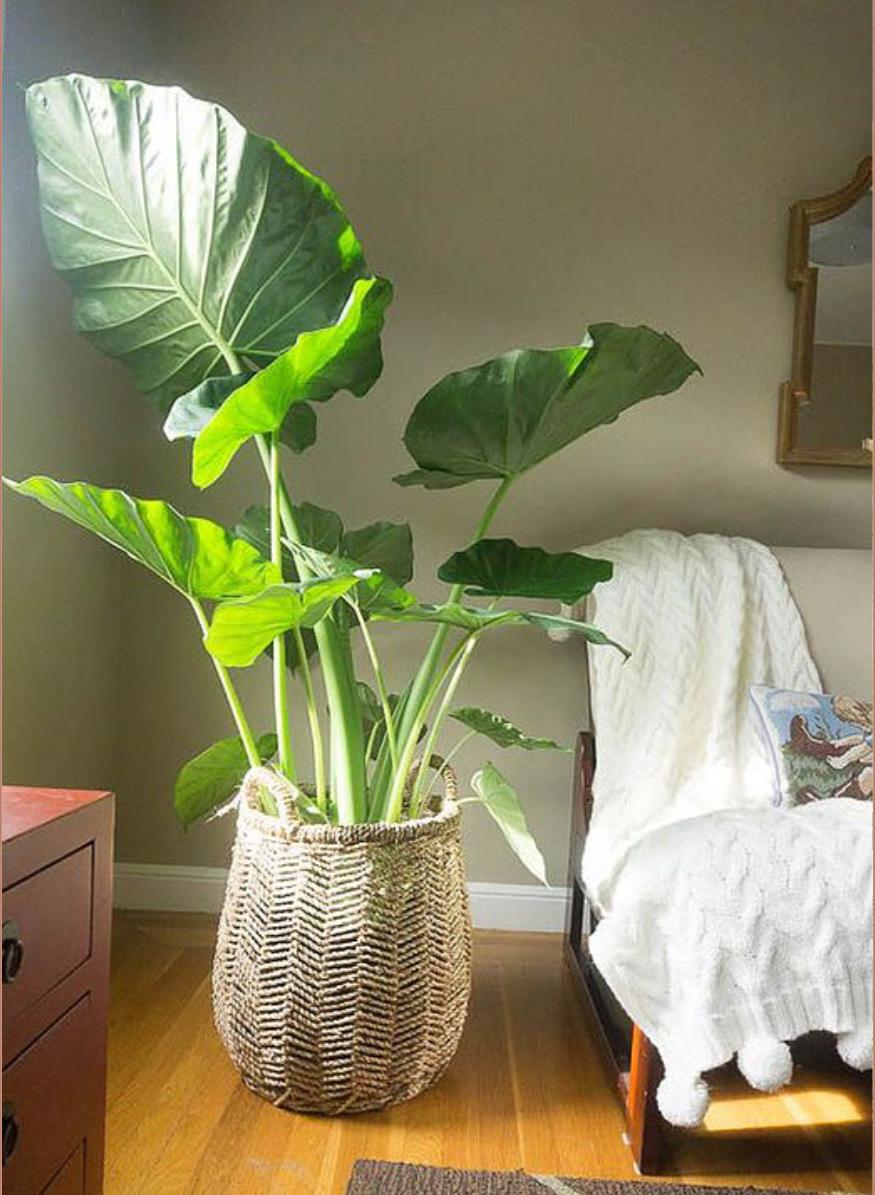 Plantas De Sombra Para Casa