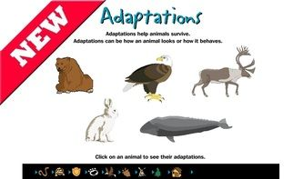 Animal Adaptations Interactive Learning Sites For Education