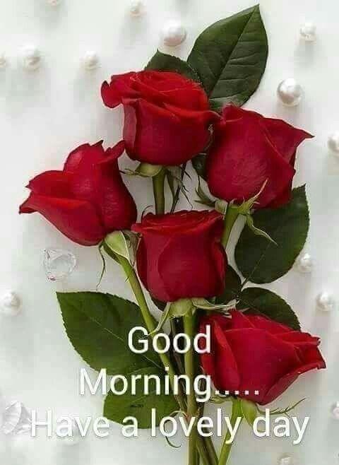 Good Morning Good Morning Coffee Purple Roses Flowers Purple