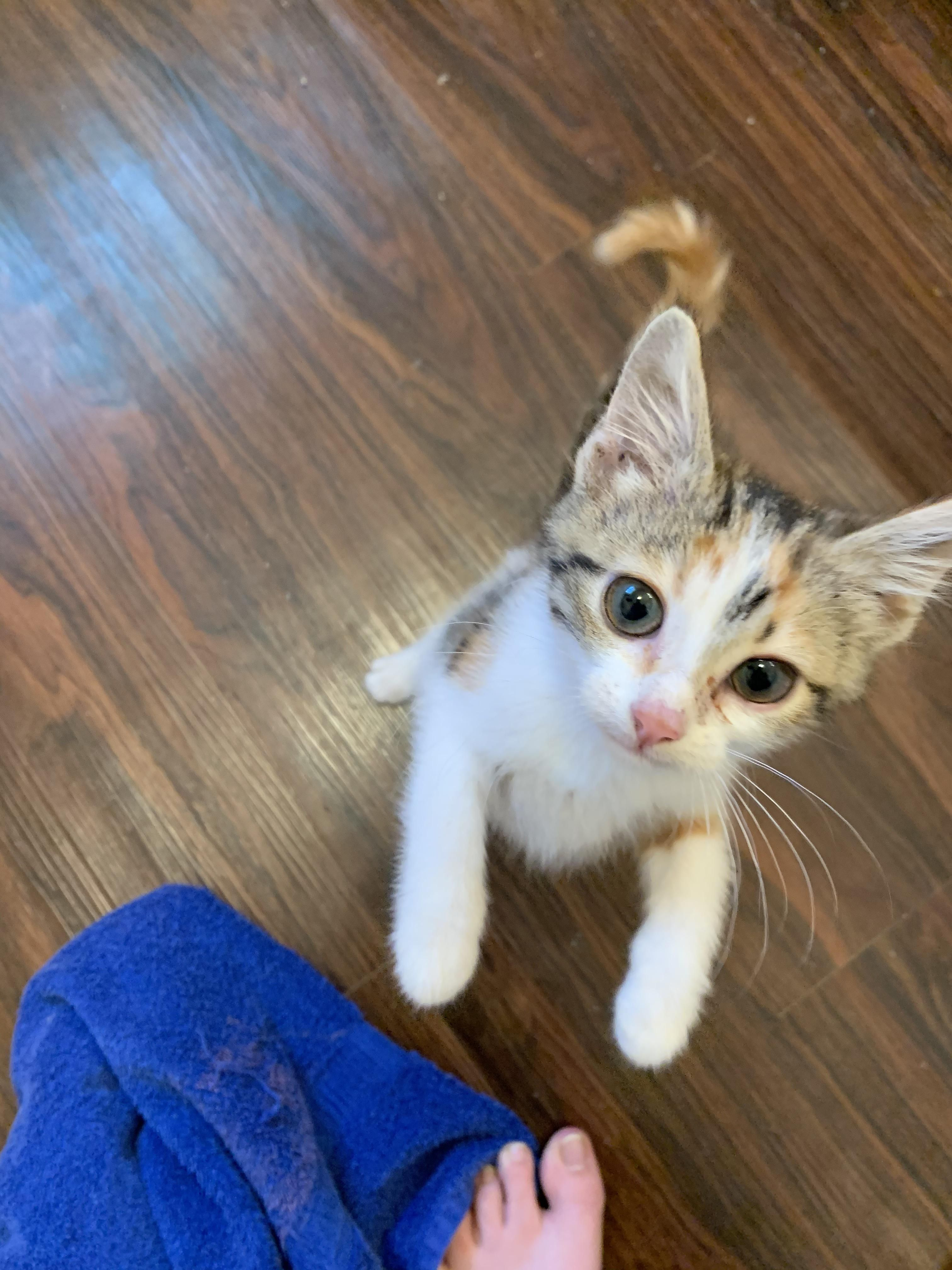 This Is Addie Our Sweet Little Foster Baby Cats In 2020 Foster Baby Kitten Cute Cats