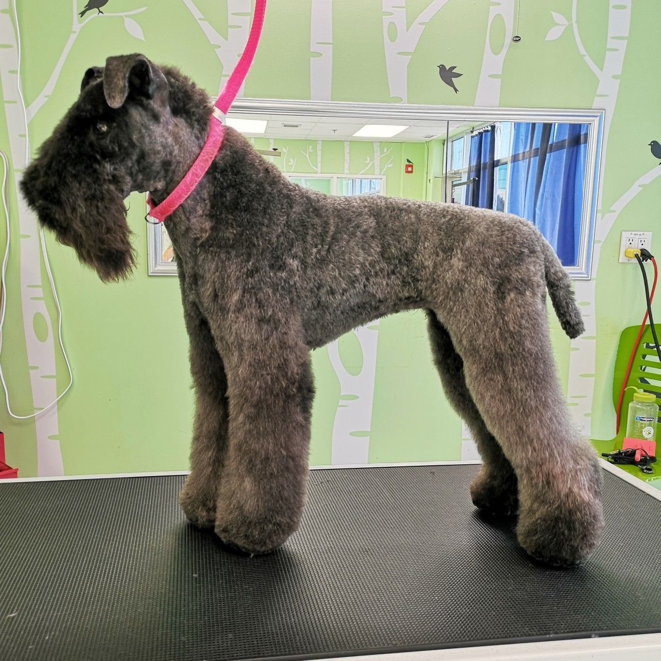 Pin by Annie Cole on Dog Grooming Dog grooming, Dogs