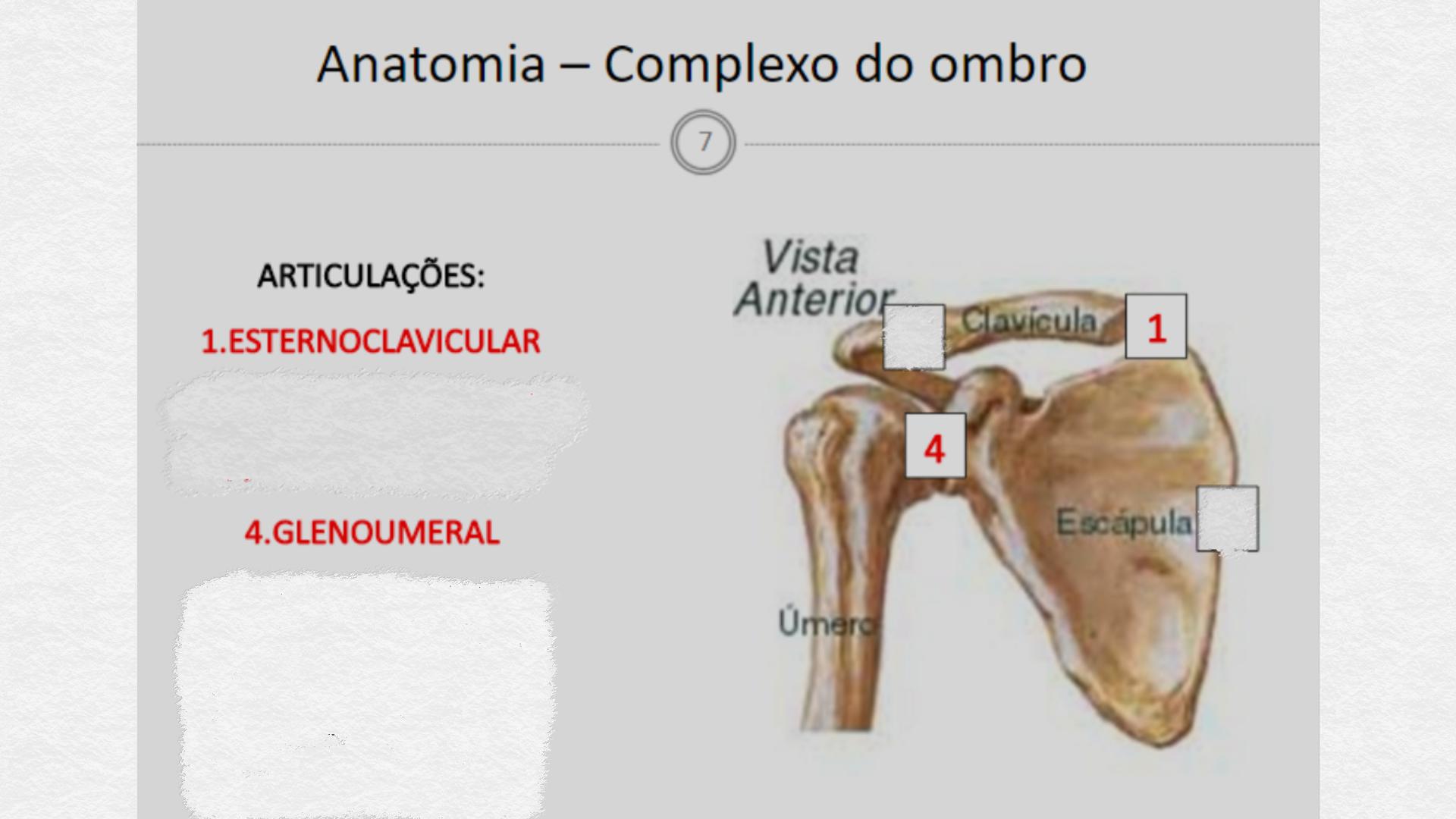 Encantador Diagrama De La Anatomía Escápula Bandera - Anatomía de ...