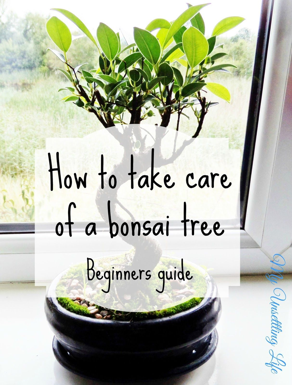 My Unsettling Life How to take care of a bonsai tree Beginners