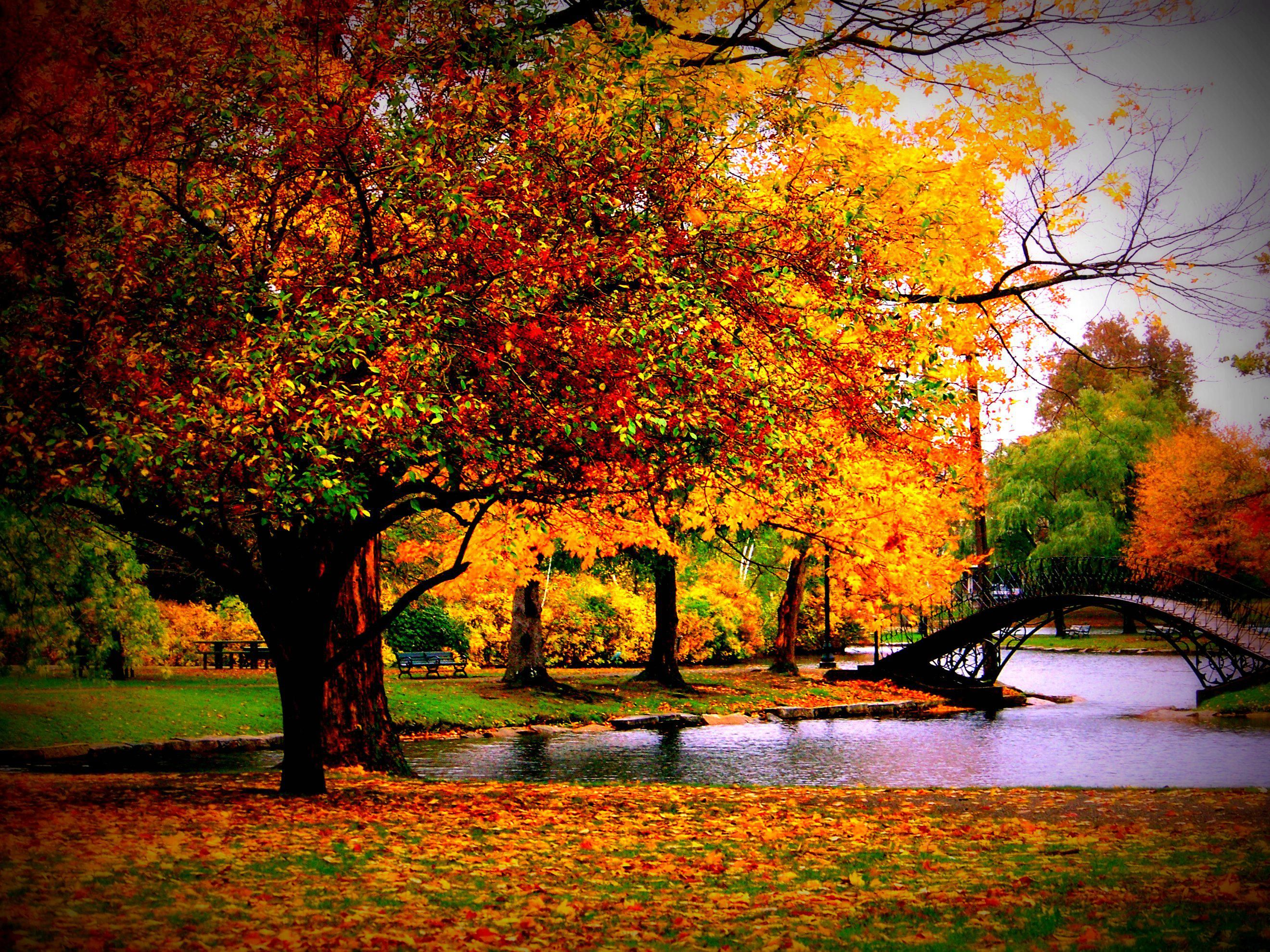 Wallpaper Collection 37 Best Free Hd Fall Desktop Wallpaper Background To Download Pc Mo In 2020 Desktop Wallpaper Fall Scenery Wallpaper Fall Desktop Backgrounds