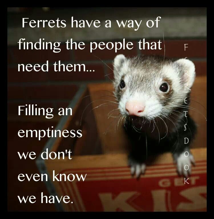 My ferrets will never realize how much they mean to me