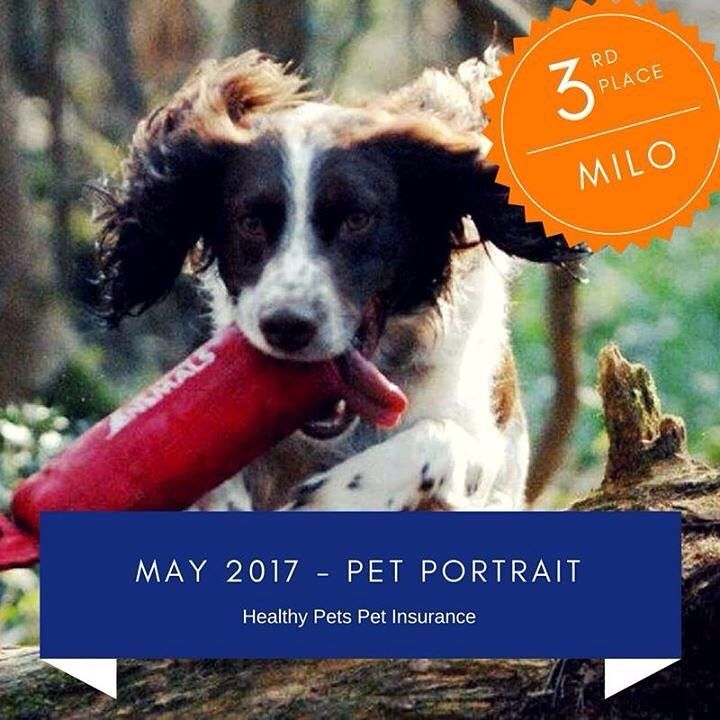 The Lovely Milo Took This Month S 3rd Place In May S Pet Portrait Competition Healthypetsinsurance Healthy Pets Pets Pet Portraits