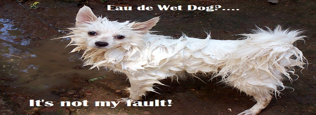 Why Do Dogs Stink After A Bath Dogs Cute Funny Dogs Dog
