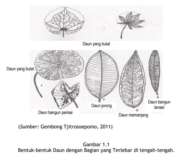 Penjelasan Morfologi Daun Secara Lengkap Pintar Biologi Geometric Tattoo Triangle Tattoo Daun