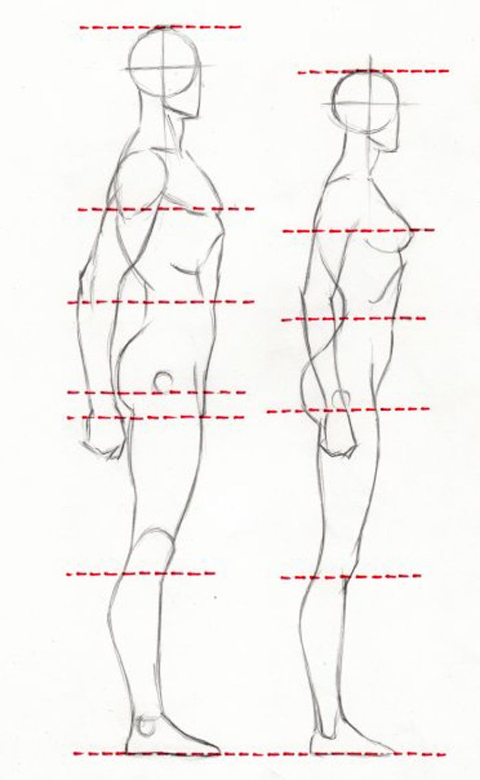 Proportions proportions of male and female figures are similar despite the differences in height the way to learn to draw proportions correctly