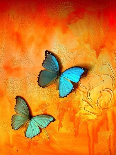 Orange And Aqua: Aqua/Turquoise & Orange Butterflies