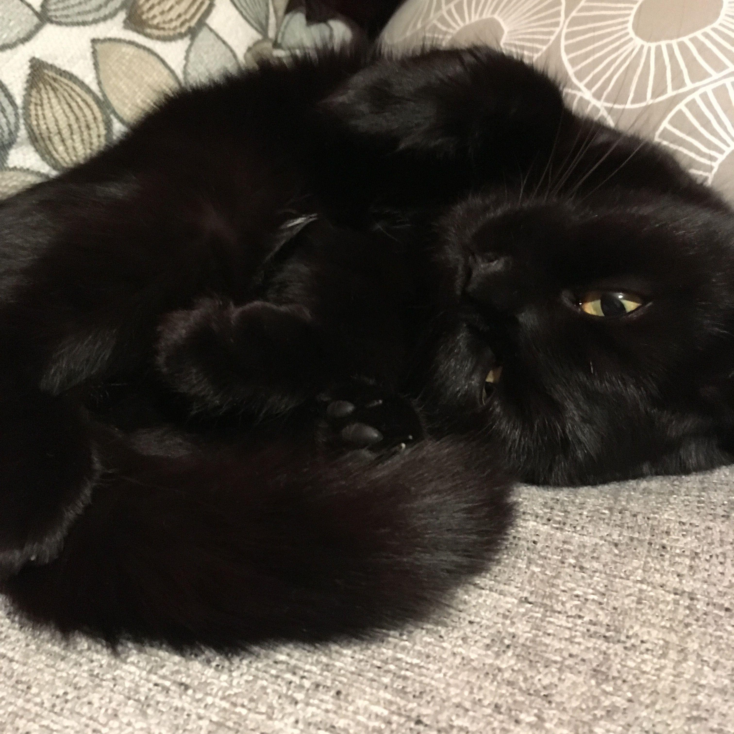 Pin de Emma Pyle en Cuties Gatos