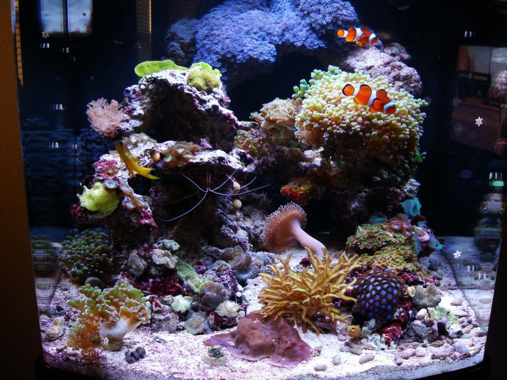 Justin S 28 Gallon Jbj Led Nano Cube Page 4 Gallon Reef Tank Cube
