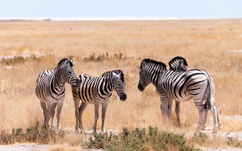 Zebra Small Talk  Animals photo by kurthinterreither http://rarme.com/?F9gZi