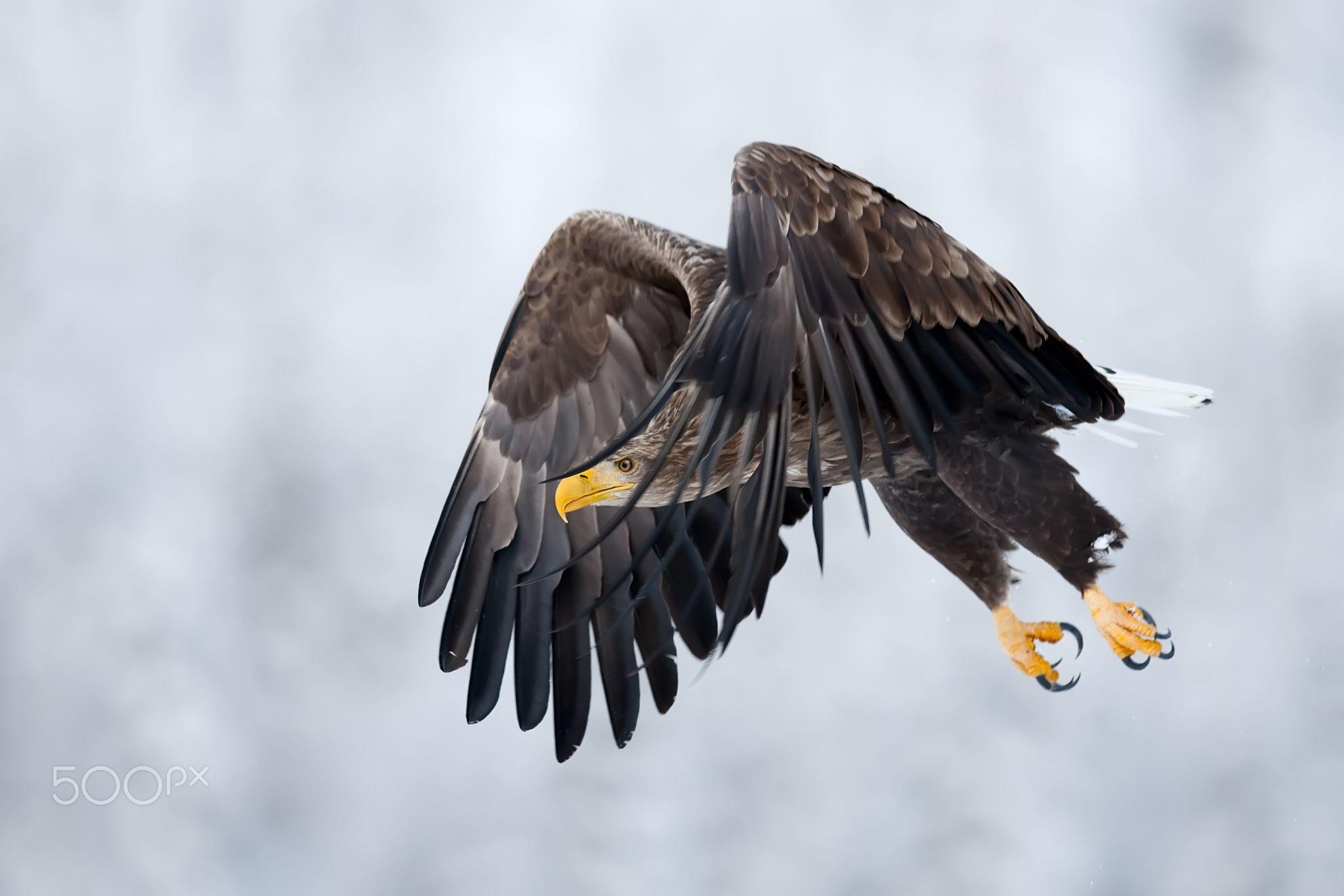 Flying by Alari Kivisaar
