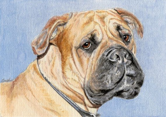 My commissioned pet portraits are watercolor paintings of your beloved pets. I love to paint your pet in great detail. I specialize in unconventional