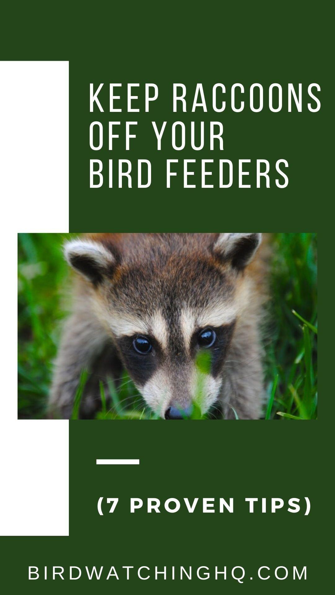 7 Ways To Keep Raccoons OFF Your Bird Feeders! (2020